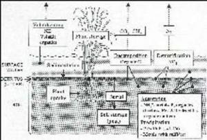 contaminant removal in wetlands